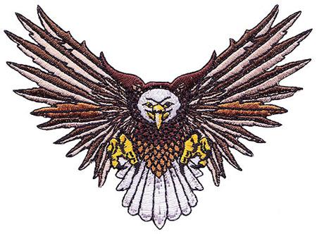 P-eagle-fly.jpg